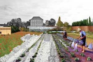 068_03_collage-potager02